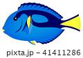 ナンヨウハギ 魚 海水魚のイラスト 41411286