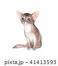 子猫 ねこ ネコのイラスト 41413593