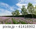 チャイブ 花 ファーム富田の写真 41416902