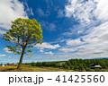 美瑛 晴れ 自然の写真 41425560