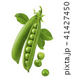 Green peas in pods isolated on white background 41427450