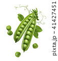 Green peas in pods with sprouts isolated  41427451