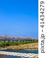 郡川 桜 花の写真 41434279