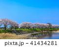 郡川 桜 花の写真 41434281