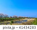 郡川 桜 花の写真 41434283