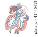 門脈 内臓 臓器のイラスト 41440415