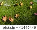 秋のもみじ 落葉 41440449