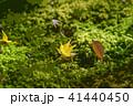 秋のもみじ 落葉 41440450