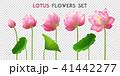 フラワー 花 芽のイラスト 41442277