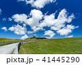 美ヶ原 新緑 高原の写真 41445290