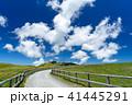 美ヶ原 新緑 高原の写真 41445291