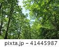 森 森林 樹木の写真 41445987