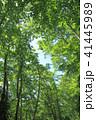 森 森林 樹木の写真 41445989