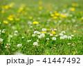 春の野花1 41447492