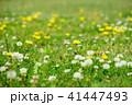 春の野花2 41447493