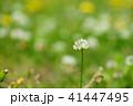 春の野花4 41447495