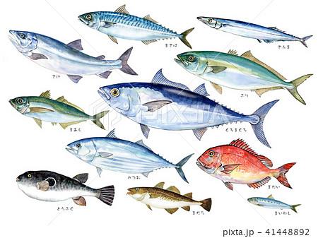 魚料理 海水魚水彩イラスト 41448892