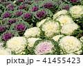 あき 秋 花の写真 41455423