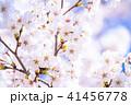 桜 花 春の写真 41456778