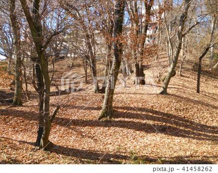 冬の多摩平の森緑地 41458262