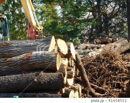 森林伐採 41458551