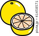 グレープフルーツ 41458571
