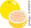 グレープフルーツ 41458572