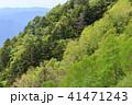 森林 風景 晴れの写真 41471243
