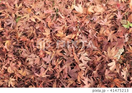 秋の美しいもみじ、紅葉の落ち葉 41475213