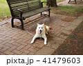 公園のベンチで伏せて待っている犬 41479603