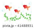 魚類 淡水魚 観賞魚のイラスト 41488931