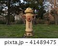黄色い消火栓 41489475