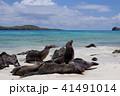 ガラパゴス諸島 動物 哺乳類の写真 41491014