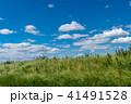 草原 青空 晴れの写真 41491528