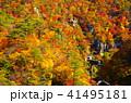 鳴子峡 秋 紅葉の写真 41495181