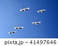 青空 鳥 タンチョウの写真 41497646