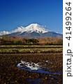 富士山 春 早朝の写真 41499264