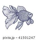 きんぎょ キンギョ 金魚のイラスト 41501247
