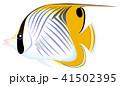 トゲチョウチョウウオ チョウチョウウオ 魚のイラスト 41502395
