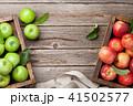 リンゴ りんご アップルの写真 41502577