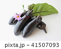 茄子 花 野菜の写真 41507093