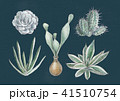 多肉植物 41510754
