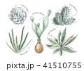 多肉植物 41510755