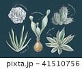 多肉植物 41510756