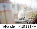 猫 動物 小動物の写真 41511540