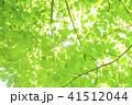 爽やかな新緑と太陽 41512044