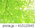 爽やかな新緑 41512045