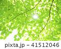 爽やかな新緑と太陽 41512046