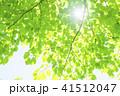 爽やかな新緑と太陽 41512047