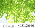 爽やかな新緑 41512049